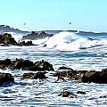 Seascape And Sea Gulls by Barbara Snyder