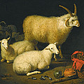 A Barn Interior With A Four-horned Ram And Four Ewes And A Goat by Aelbert Cuyp