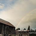 A Barn O'gold by Cheryl Baxter