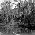 A Bayou Scene In Louisiana by Underwood Archives