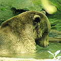 A Bear Bath by Jeff Swan