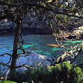 A Beautiful Cove At Point Lobos by Joyce Dickens