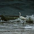A Beautiful Snowy White Egret On Hilton Head Island Beach by Kim Pate