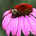 A Bee On The Highline by Steven Spak