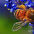 A Bee's Life by Kris Hiemstra