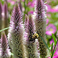A Bee's Work Is Never Done Abwndp by Jim Brage