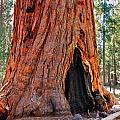 A Big Tree by John M Bailey