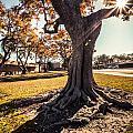 A Big  Tree Trunk Of Long Beach In The Autumn by Sviatlana Kandybovich
