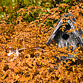 A Bird House Sits Empty In Fall by Jeff Folger