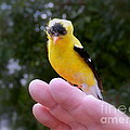 A Bird In The Hand by Linda Galok