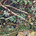 A Birds Nest Among Brambles by John Sherrin