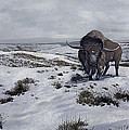 A Bison Latifrons In A Winter Landscape by Roman Garcia Mora