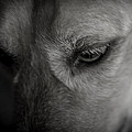 A Black And White Moment With My Dog by Jim DeLillo