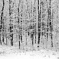 Virgin Snow by Ursula Coccomo