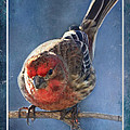 A Blue Morning Housefinch by Debbie Portwood