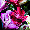 A Bouquet Of Peruvian Lilies by Donna Lee