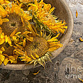 A Bowl Of Sunshine by Terry Rowe