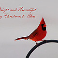 A Bright And Beautiful Merry Christmas To You by Kathy Clark