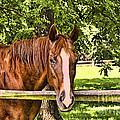 A Brown Horse by Jim Lepard