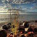 A Bunch Of Grass by Jakub Sisak