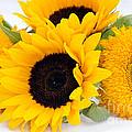 A Bunch Of Sunshine by Sheila Laurens