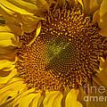 A Burst Of Sun by Arlene Carmel