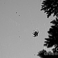 A Busy Spider by Gerlinde Keating - Galleria GK Keating Associates Inc