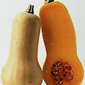 A Butternut Squash by Romulo Yanes