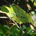 A Buttterfly Resting by Jeff Swan