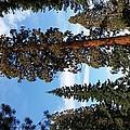 A California Sight by Melissa Harvey