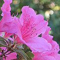 A Cape Town Flower I by Frank Chipasula