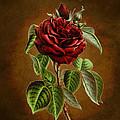A Chocolate Beauty by Sheila Savage