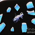 A Clockwork Blue by Joe Jake Pratt
