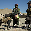 A Coalition Forces Military Working Dog by Stocktrek Images