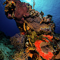 A Colorful Reef Scene With Sunburst by Brent Barnes