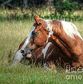 A Comfy Resting Place by Kathy Baccari