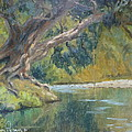 A Coramandel Stream by Terry Perham