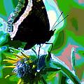 A Cosmic Butterfly by Ben Upham III