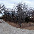 A Country Driveway Near The Brazos River by Amy Hosp