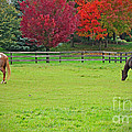 A Couple Horses And Beautiful Autumn Trees by Adri Turner