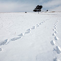A Couple Walking In The Snow by Olivier Renck