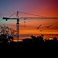 A Crane And Three Birds by Claude LeTien