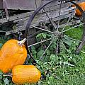 A Crop Of Pumpkins by Image Takers Photography LLC - Laura Morgan
