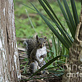 A Curious Squirrel by John Greco