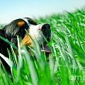 A Cute Dog In The Grass by Michal Bednarek