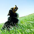 A Cute Dog On The Field by Michal Bednarek