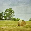 A Day At The Farm by Kim Hojnacki