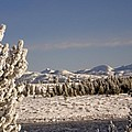 A Day Of Winter by Image Takers Photography LLC - Carol Haddon