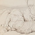 A Dead Stag by Sir Edwin Landseer