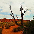 A Dead Tree Foreground A Maze Of Rocks by Jeff Swan